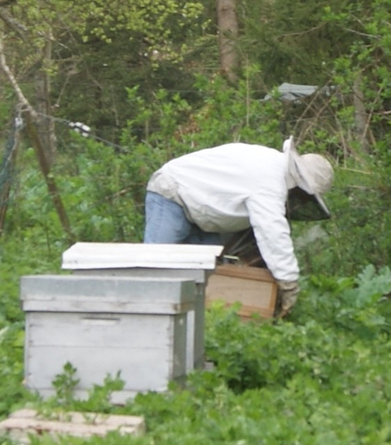 C2 abeille ruche