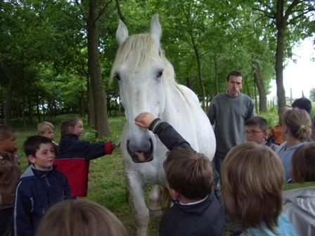C2 cheval 1
