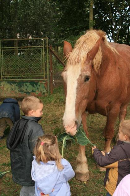 Rencontre avec les chevaux
