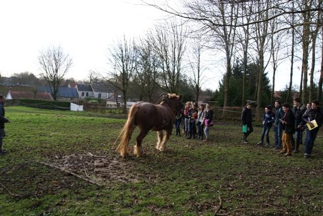 Lycee cheval herse